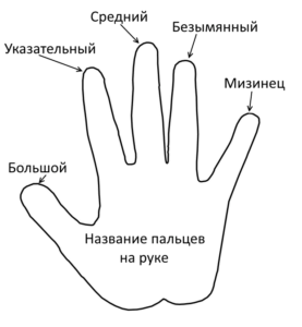 Название пальцев на руке